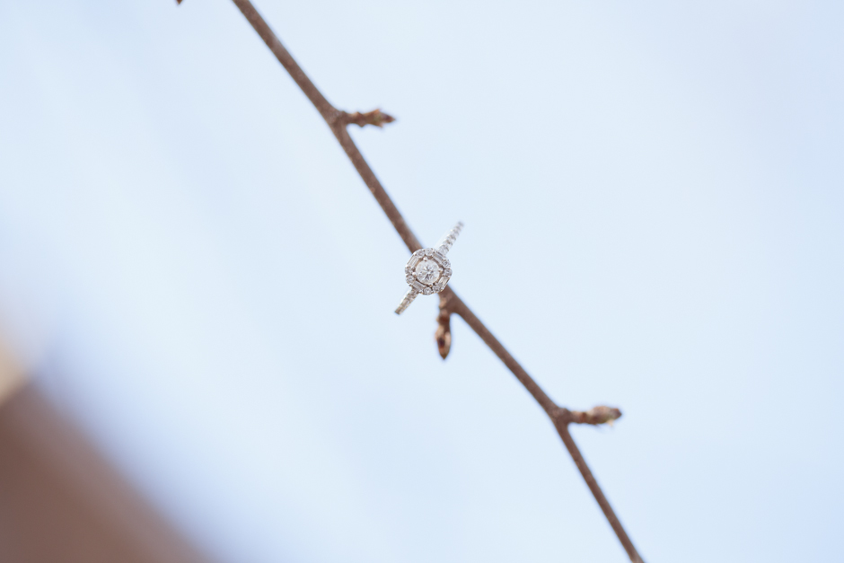 "Emily, Jim, James, Engaged, ""Richardson Nature Center"", Bloomington, Photos, Images, Park, Winter, Snow, Snowy, Grass, ""Tall Grass"", ""Golden Grass"", MN, Minnesota, ""Jessica Hannon Photography"", ""fotofilm studios"", Diamond, Ring, Branch, Tree"